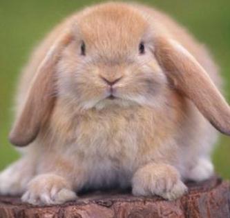 宠物兔加盟
