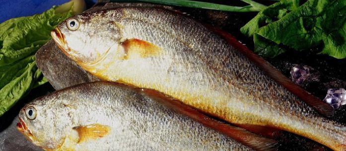 阿史水产鱼类