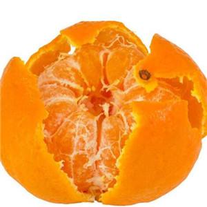 桉荭贸易橘子