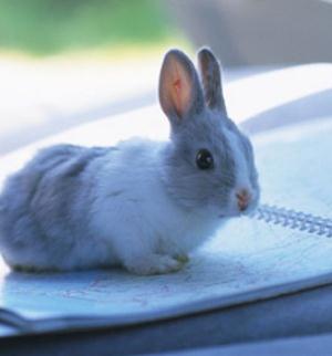 宠物兔可爱