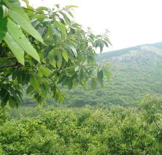百香鮮果園