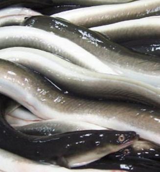 阿史水产鲳鱼
