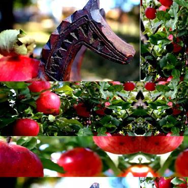 阿琼果园鲜红