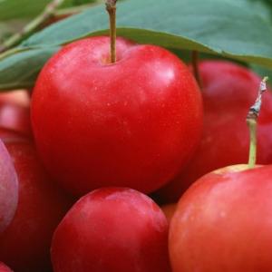 优鲜果业健康