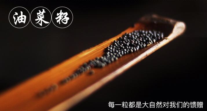 金浩菜籽油宣傳圖