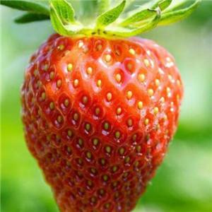 鲜果记草莓