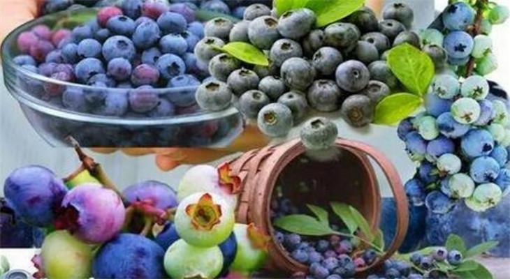 鲜果之家蓝莓