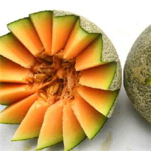 鲜果乐园哈密瓜