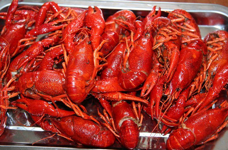 武汉虾皇龙虾展示