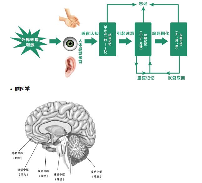 京典思塾结合脑科学