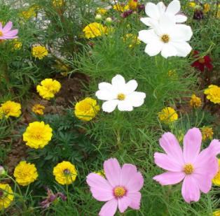 愛慕鮮花小花