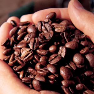 帝芬诺咖啡豆子