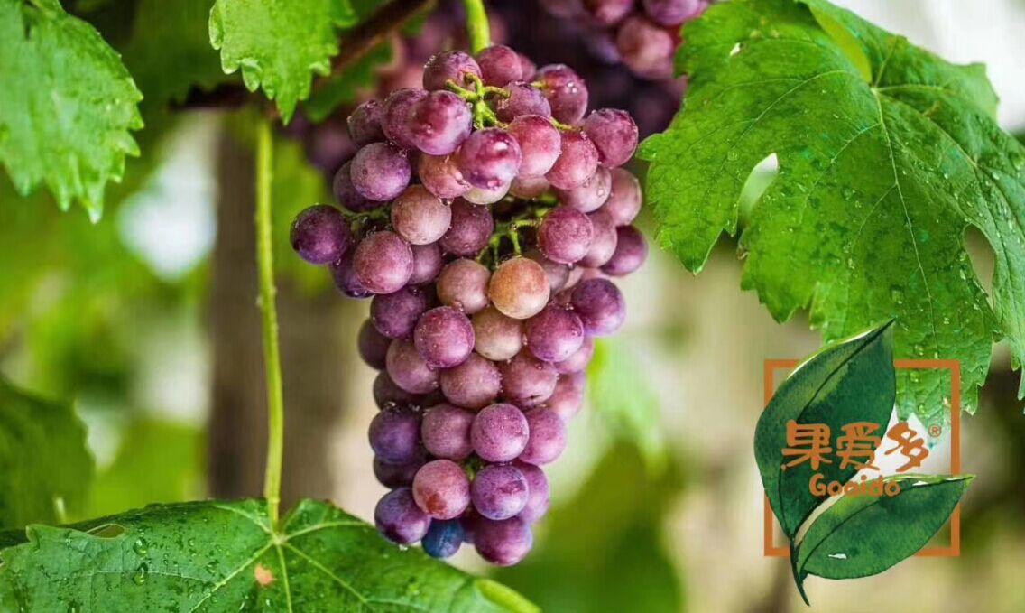 果爱多新鲜葡萄