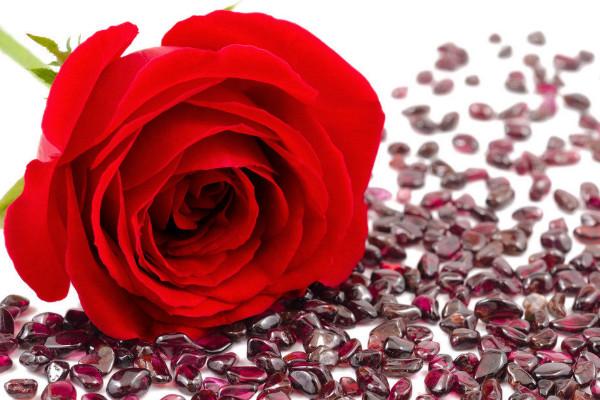 艾蘭慕德玫瑰圖片