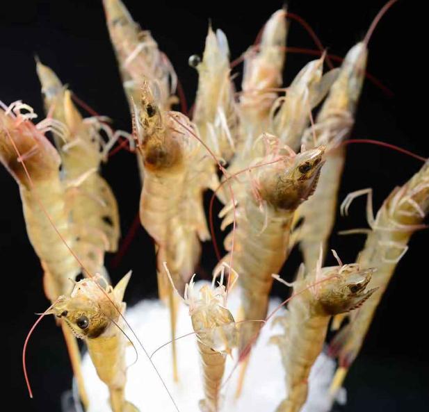 鲜货俚鲜雷竞技二维码下载虾类