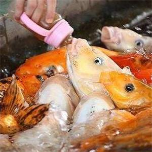 溜溜鱼喂鱼