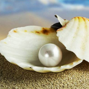 洞庭珍珠圆润