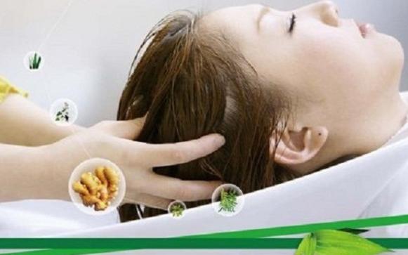 降血脂中草药茶配方图片