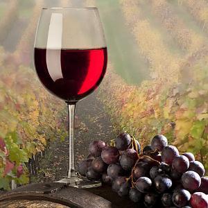 普罗旺斯葡萄酒很好