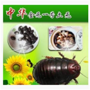 中华金元1号土元养殖