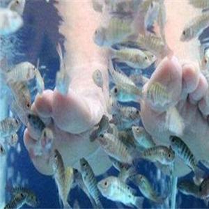 小鱼足道加盟