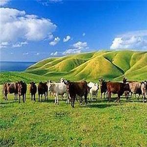 中国青年旅行社草原