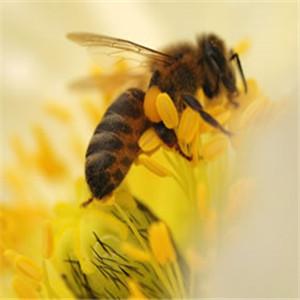 颐园牌蜂蜜蜜蜂