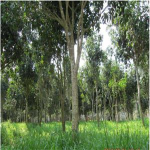 招宝刘老根生态农庄树木