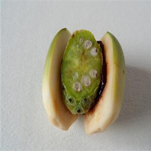 龍仔檳榔原料