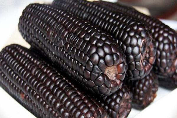 丰园山庄小杂粮黑玉米