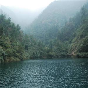 三涛旅游树林
