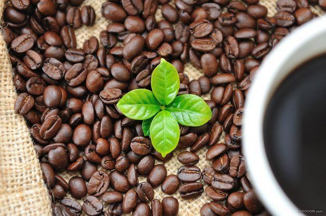 葉子咖啡加盟