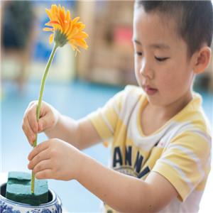 树果国际幼儿园学习