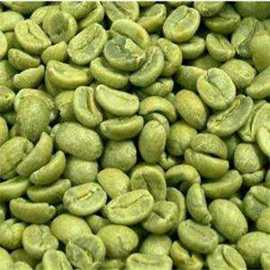 綠咖啡減肥
