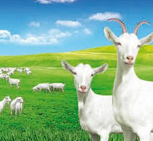 康健羊奶粉草原