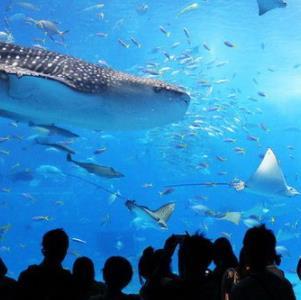 美之海水族馆