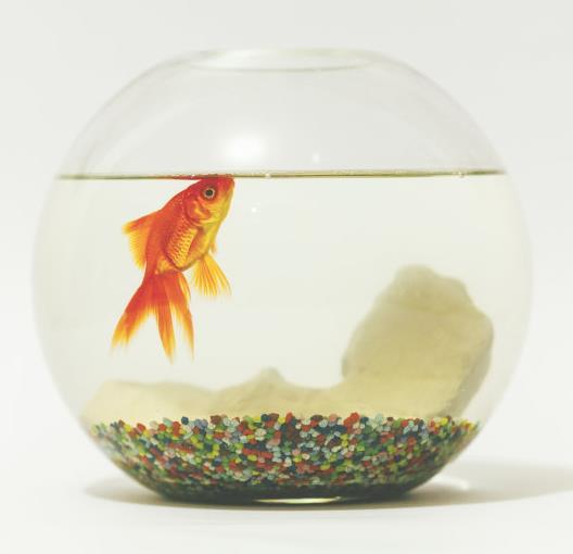 可爱丽鱼缸金鱼