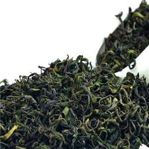 早春绿茶多个