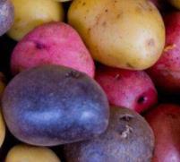 起司彩色土豆