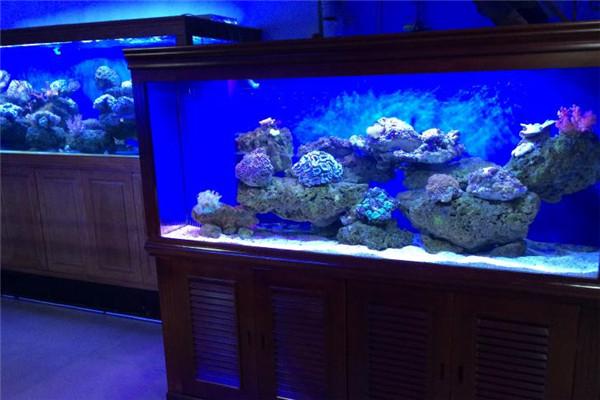 可爱丽鱼缸礁石