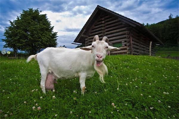 美玲羊奶牧場