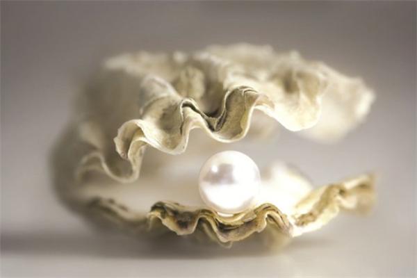 一粒珍珠養殖