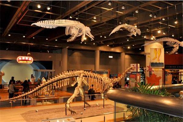 智高科学馆恐龙