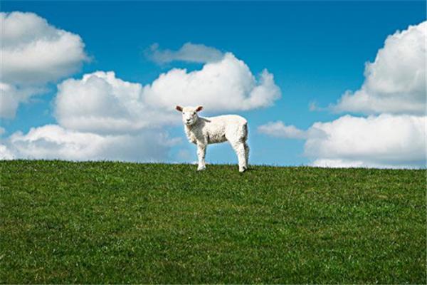 优和羊奶粉宣传