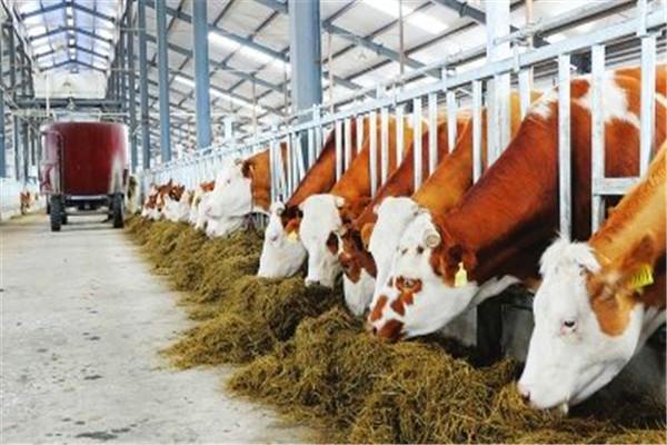 中牧農業-畜牧