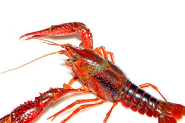 半夜虾叫小龙虾好吃