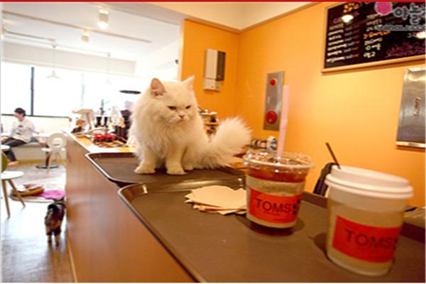 MissCat貓貓主題咖啡品牌