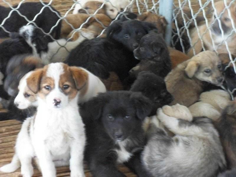 肉狗养殖加盟