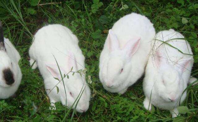 养兔子加盟
