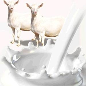 貝樂能羊奶粉加盟